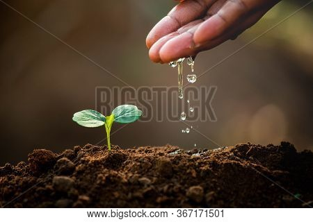 Earth Day Concept. Drop Water On Hand For Growing Tree. Protect The Environment. Renewable Energy Fo