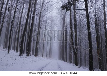 Winter Unmaintained Forest Road From The Realm Of Dreams With A Magical And Unforgettable Atmosphere
