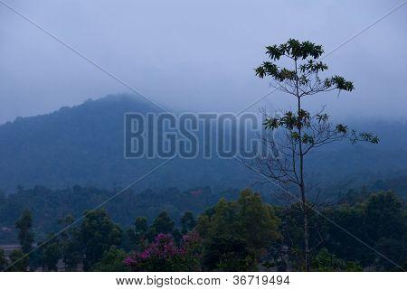 Evening Mountain Scene