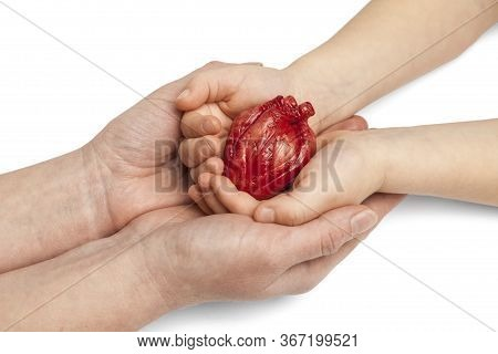 Saving Life Is Heart Transplant. Mother And Baby Hands Hold Organ On White Background, Concept.