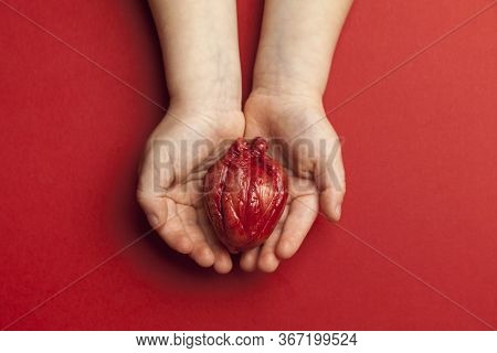 Heart Surgery Concept, Kid Hands Holds Organ On Red Background. Life Saving And Transplantation.