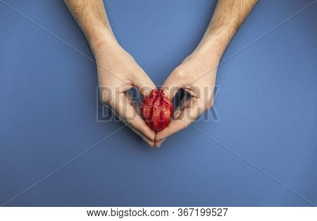 Saving Life Is Heart Transplant. Hands Hold Organ On Blue Background, Concept.