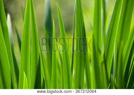 Green Grass In The Background Of Bright Sunlight From The Back