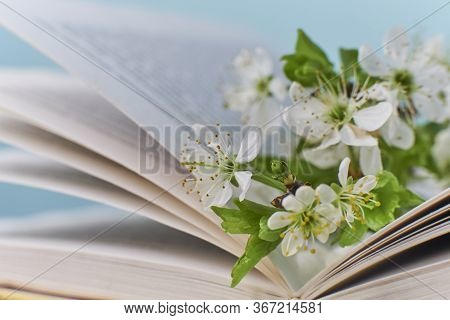 Cozy Home Still Life: Spring Flowers And Opened Book With Warm Plaid. Springtime Concept, Free Copy