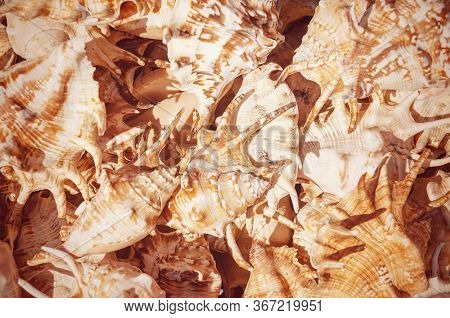 Concept Group Of Sea Shells. Seashells Background. Top View Close Up Of Mollusk.texture Of Shells To