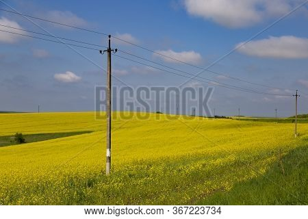 Panorama Of Flowering Rapeseed Fields On The Hills Among Green Trees. Agricultural Field Of Yellow R