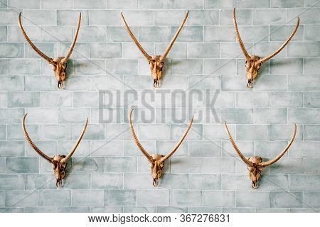 Decorated And Carved Gold Animal Skulls On The Brick Blue Wall. Unusual And Different Decoration Of