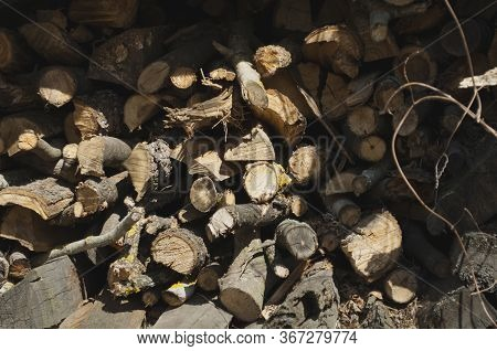 Stacked Old Rotten Dirty Firewood With Bark, Stocks. The Photo Was Taken On A Sunny Day In Bright Li