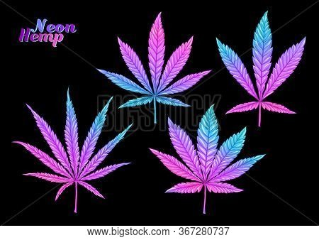 4 Grades Of Cannabis Leaf Set Sativa, Indica, Hybrid, Ruderalis. Clip Art, Set Of Elements For Desig