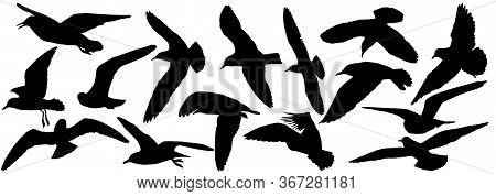 Silhouettes Of Seagull Birds, Set. Vector Illustration