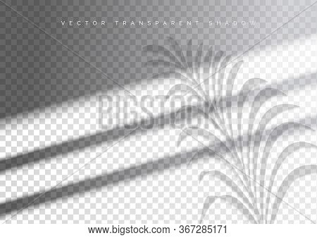 The Transparent Shadow Overlay Effect. Tropic Leaf And Window Blind. Mockup With Overlay A Palm Leaf