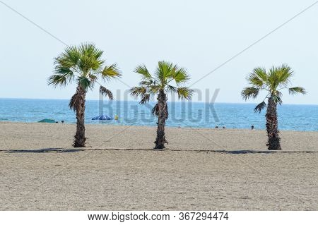 Three Palms Oasis On The Beach Of Roquetas De Mar. August 14, 2019. Roquetas De Mar Almeria. Spain.