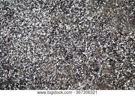 Sunflower Peels On The Ground. Organic Waste. Sunflower Waste. Seed Peels.