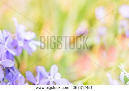 Bluer And Defocus.colorful Background In Green Pink Colors, The Bokeh Effect.element Of Design.pink