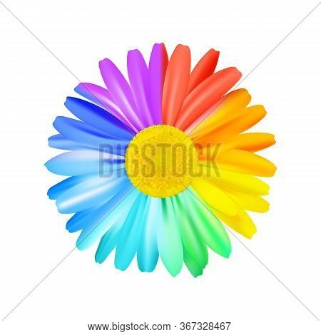 Beautiful Rainbow Daisy Flower, Multicoloured Camomile. Bright Floral Element. Premium Vector.