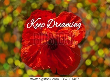 Red Poppy Flower In The Meadow. Amazing Wild Poppies Wallpaper. Beautiful Nature Photo Copy Space. F