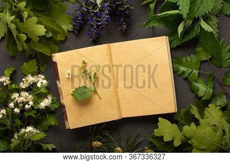 Frame Of Medical Herbs Top View, Naturopathy Concept, Alternative Medicine Concept.
