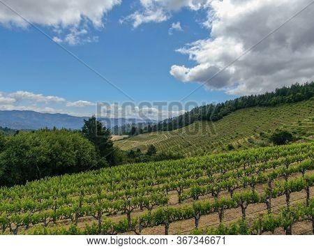 Aerial View Of Napa Valley Vineyard Landscape During Summer Season. Napa County, In Californias Wine