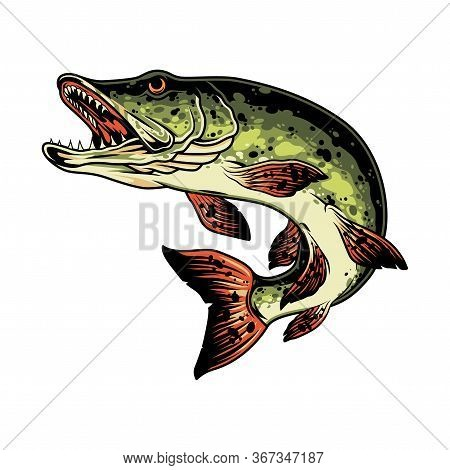Pike Fish Colorful Vintage Concept Isolated Vector Illustration