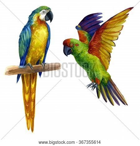 Watercolor Illustration A Parrot Sitting On A Branch, A Parrot With Raised Wings, A Flying Parrot.