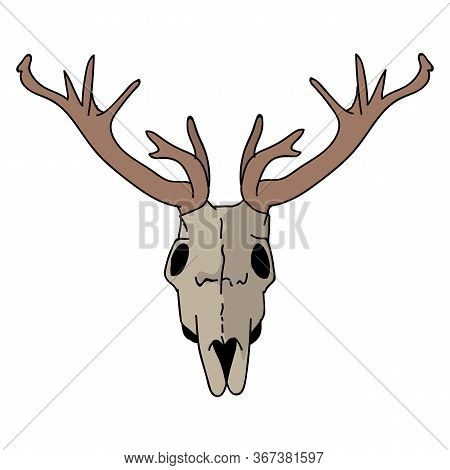 Deer Skull Vector Clipart. Forest Antler Flat Color Illustration. Hand Drawn Forest Animal Horn Dood