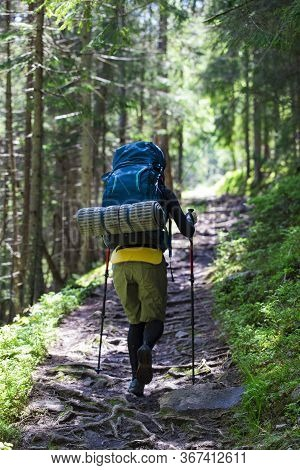 Hiking Girl Is Walking A Mountain Trail In Forest. Girl With A Tourist Backpack And Trekking Poles W
