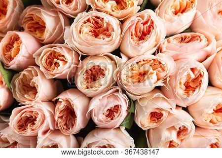 A Wall Of Beautiful Roses. Background. Close-up.