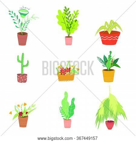 Flowers And Plants In Pots Vector Illustration In Flat Style. Set Of Flowers In Pots On A White Back