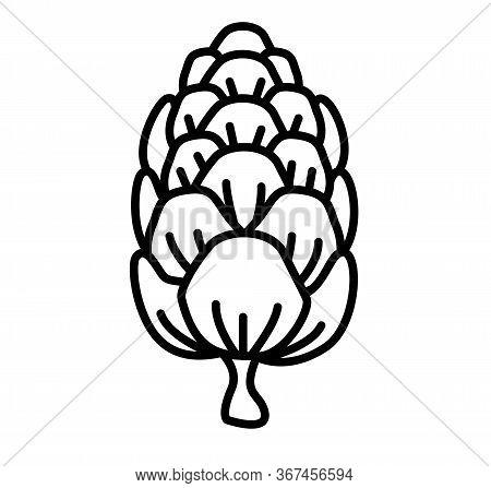 Larch Cone Vector Illustration - Conifer Cone Logo Design