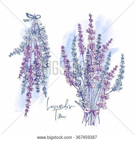 Cute Card With Of Hand Drawn Sketch Of Lavender Flower And Small Bow Isolated On White Background. F
