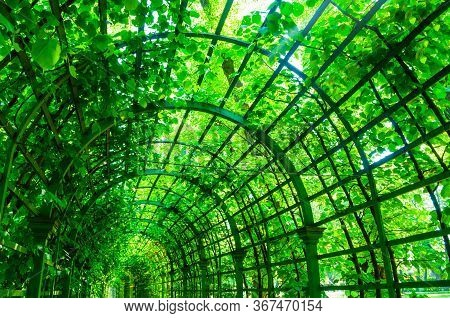 Summer landscape - metal ached tunnel covered with green climbing plants, summer garden landscape with soft sunlight. Colorful summer landscape, summer park scene, sunny summer background