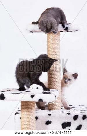 Little Funny Kittens Play With Each Other In The Game Complex For Cats.