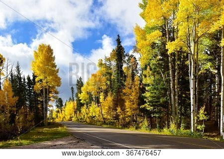 Road Through The Aspens In Fall At The North Rim Of The Grand Canyon.