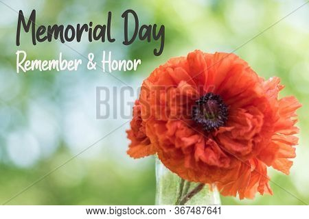 Red Poppy Flower For Memorial Day Remember And Honor Text