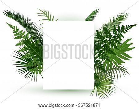 Green Tropical Leaves Frame For Random Text On White Background. Exotic Jungle Leaves Vector, Greene