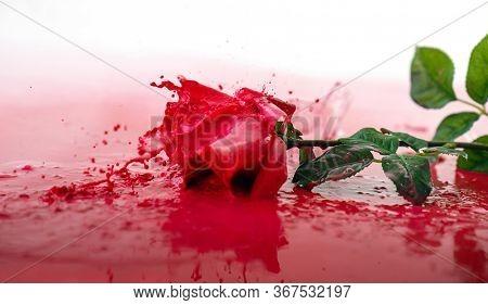 Red rose in a splash of a red liquid