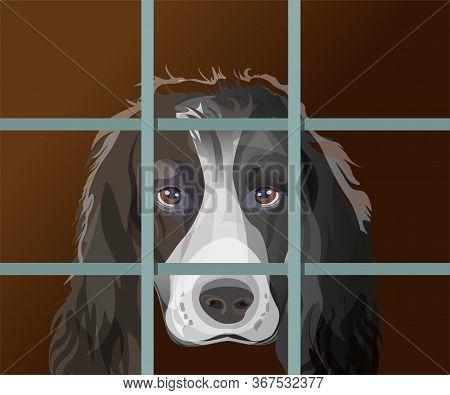 Lonely Dog With Sad Eyes Behind Bars