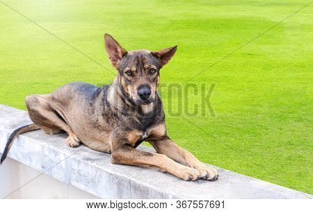 A Cute Adult Mixed-breed Black And Brown Dog Looks Into The Camera With Sweet Brown Eyes. Adorable P