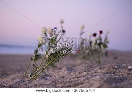 Funeral Flower, Lonely White And Red Roses And Daisy Flowers At The Beach, Water Background With Cop