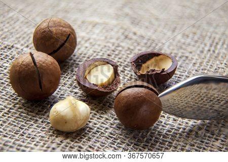 Macadamia Nuts. Ingredient, Fruit. Closeup View Of Natural Macadamia Oil And Macadamia Nuts. Healthy