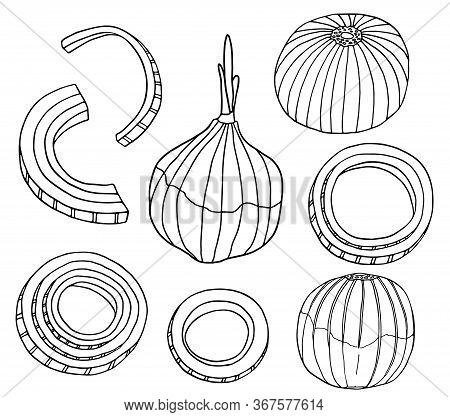Outline Onion Vector Illustration Set. Hand Drawn Black And White Bulb, Rings And Slices Of Onion. F
