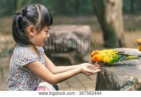 Happy Asian Child Girl Is Feeding Birds Or Parrot Sun Conure In Zoo Of Thailand. Sitting And Feeding