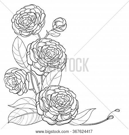Vector Corner Bouquet With Outline Camellia Flower Bunch, Bud And Leaf In Black Isolated On White Ba