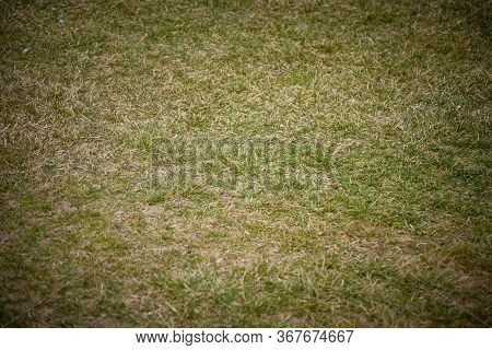 A High Angle Shot Of The Short Green Grass On A Meadow Captured During The Day Time