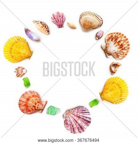 Top View On Different Sea Shells With Circle Copy Space. Flat Lay With Colorful Mollusc Shells, Cora