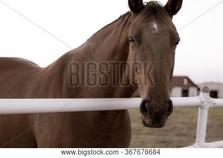 Monotone Photograph Of A Brown Horse Peering Over A Farm Fence With A Barn In The Background.