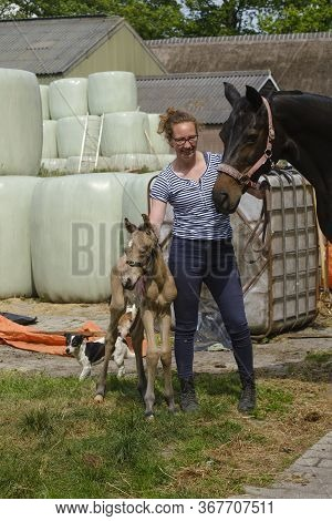 Cute Newborn Riding Horse Colt Stands Next To A Woman In The Grass. At The Farmyard, Yellow Dun Colo