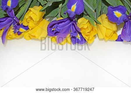 Yellow Tulips, Purple Irises, Green Leaves And Stems. Horizontal Photography. Greeting Card For Moth