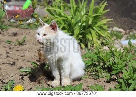 Sick Cat On The Grass In The Spring Basking In The Sun