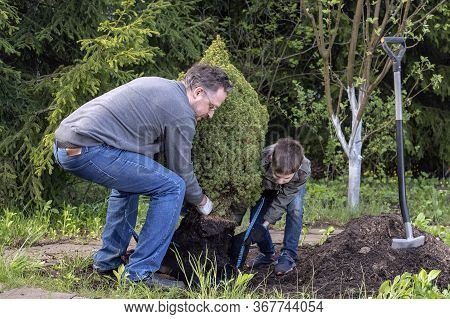 Father And Son Plant Young Tree In The Garden. Concept Family Work, Hobbies, Planting Seedling.